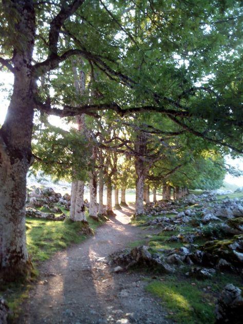 Bosque de Hayas.