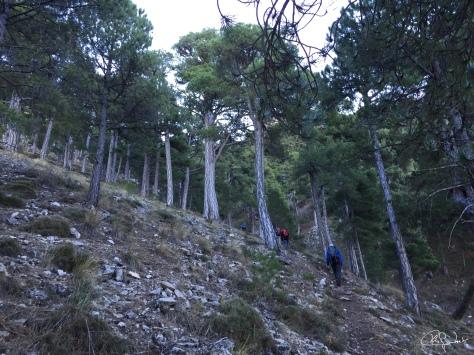Subida a La Sagra-Granada 8-11-15...f19