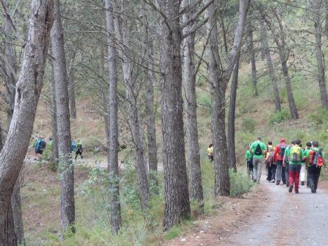 Caminando por el bosque nuevamente.